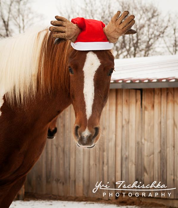 Weihnachts-Elch 2012, Foto: Yvi Tschischka