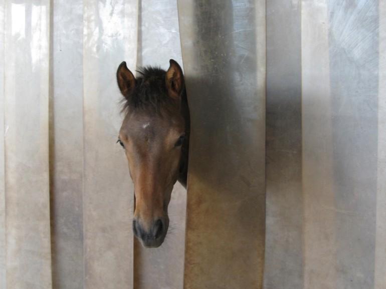 Dimera August 2009