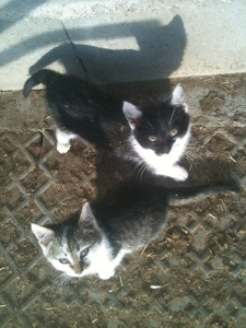 nervige Katzen