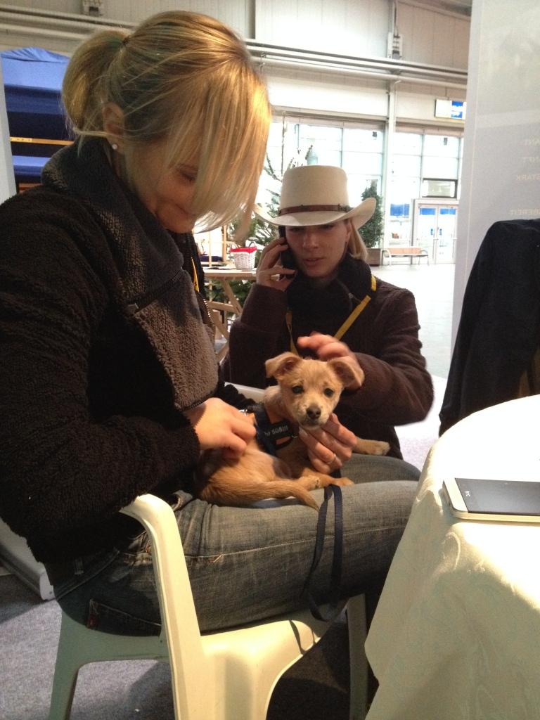 Hundesitter am Stand - heiß begehrter Job! Foto: privat