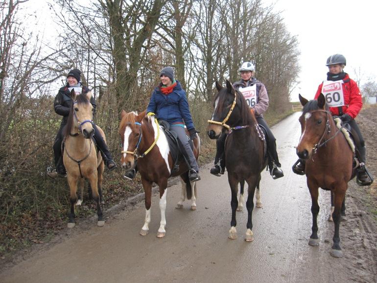 Jacinto, Diosa, Fénix und Kiwi in Hohenholz - Foto: privat