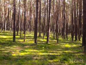 Wunderburg-Wald
