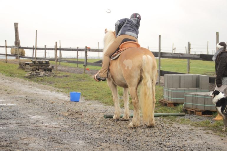 Schöne Pferdepopos
