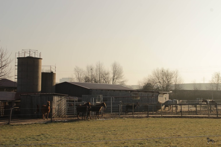Der Zykloopenhof 2015 - Foto: privat