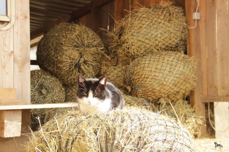 Katze und Heu - Foto: privat