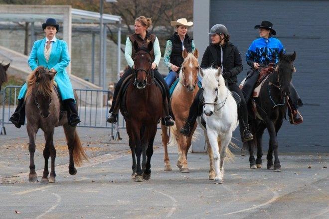 Gangpferde auf dem Weg zum Aktionsring - Foto: Thorsten Ruthof