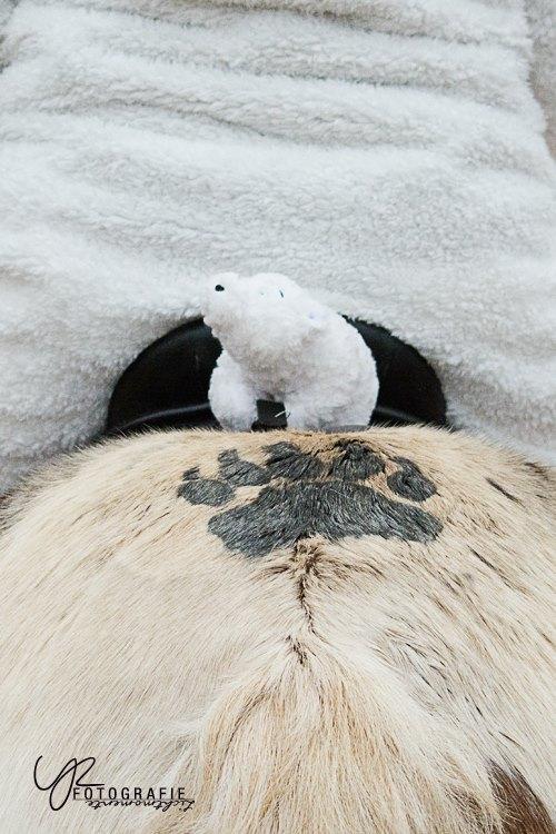 Eisbärendetails