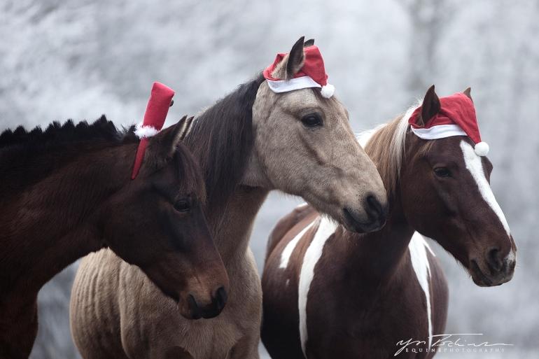 Weihnachtsponys