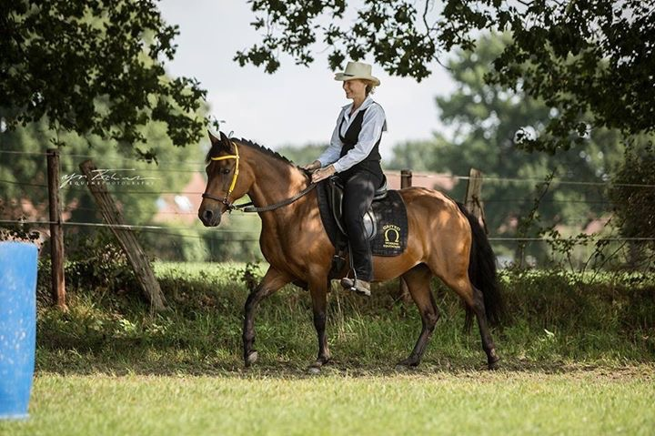 Resi Gaited Working Equitation Hünxe
