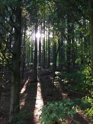 Märchenwald? - Foto: privat