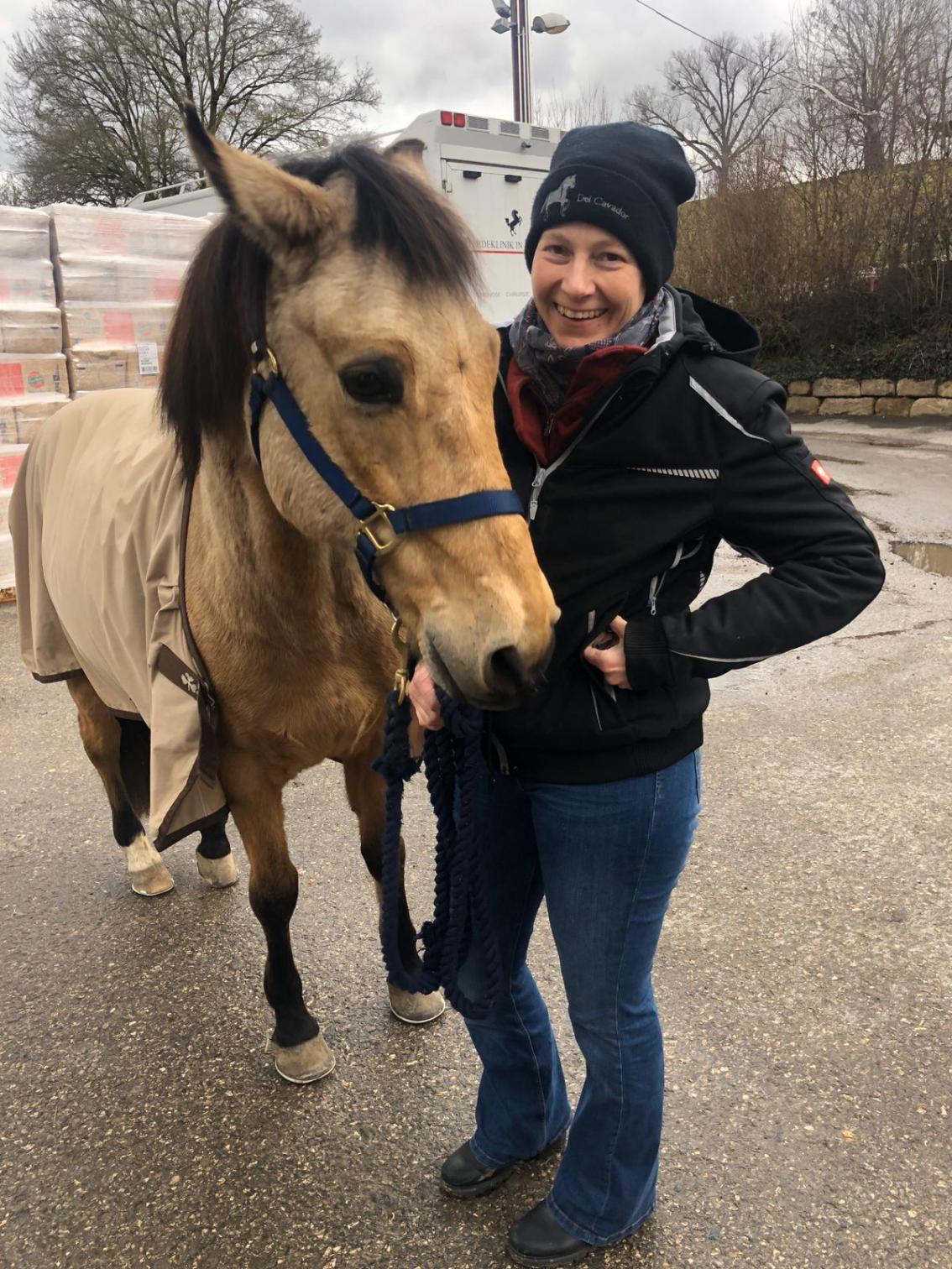 Alte kaputte Pferde?